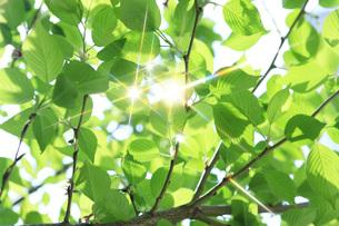 新緑 FYI00045778