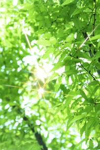 新緑 FYI00045791