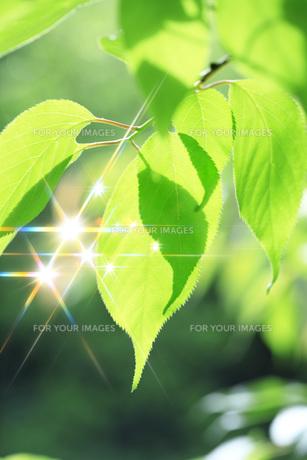 新緑 FYI00045798