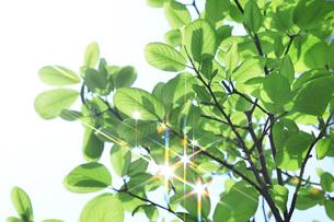 新緑 FYI00045799