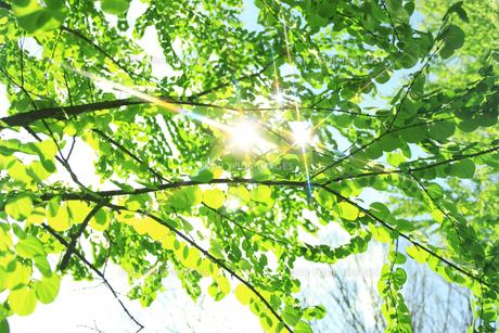 新緑 FYI00045812