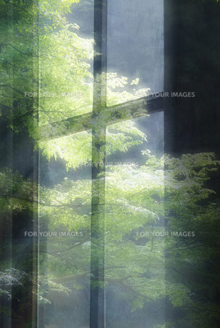 新緑の窓 FYI00046571