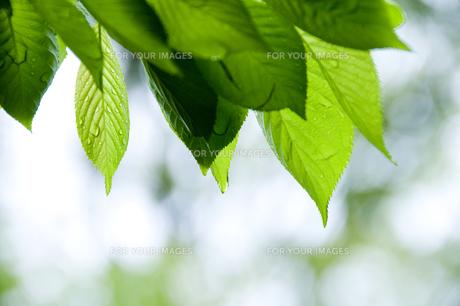 新緑 FYI00046831
