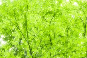 新緑 FYI00046836
