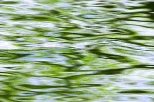 新緑の水面 FYI00046842