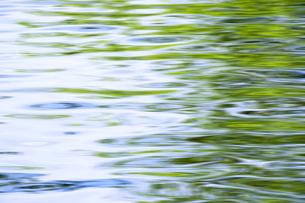 新緑の水面 FYI00046847