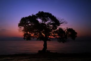 夜明けの湖畔 FYI00046869
