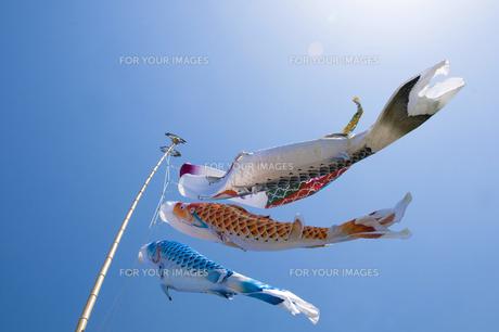 鯉のぼり FYI00046905