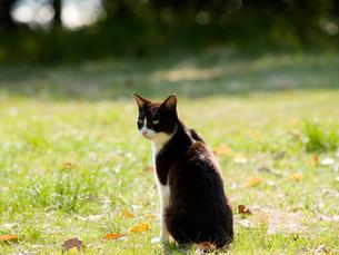 振り返る猫 FYI00048593