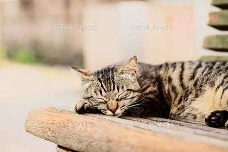 寝そべる猫 FYI00048968