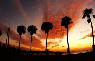 夕焼けの海岸 FYI00049226