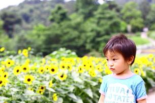ひまわり畑で遊ぶ子供 FYI00049238