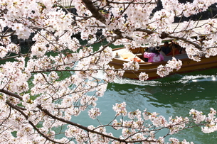桜と観光船 FYI00049262
