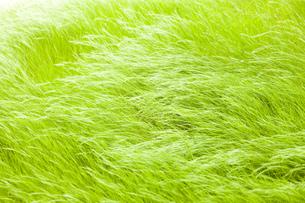 風の草原 FYI00049701