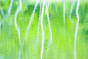 新緑の池 FYI00050227