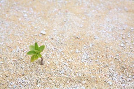沖縄の砂浜 FYI00050816