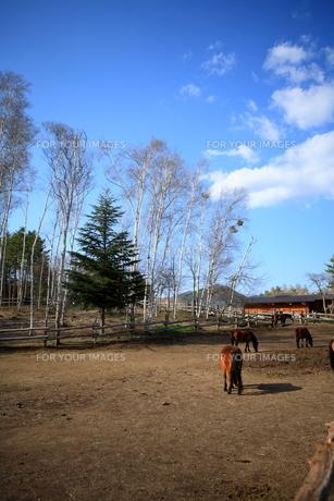 開田高原の空と木曽馬 FYI00050820