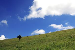 夏の車山高原 FYI00050829