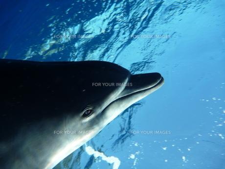 イルカの目 FYI00053707