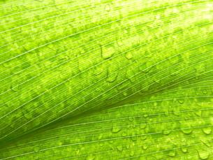 水滴と葉 FYI00055486