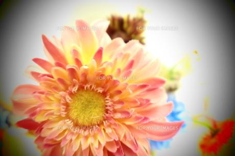 加工された造花 FYI00055912