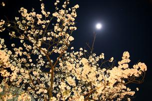 夜桜 FYI00057494