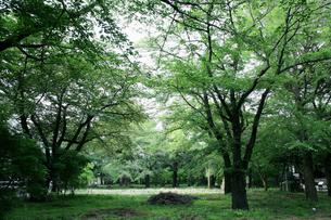 森林 FYI00057552