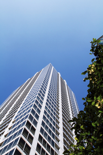 新緑と高層ビル FYI00058512