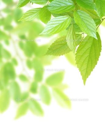 新緑イメージ FYI00062268