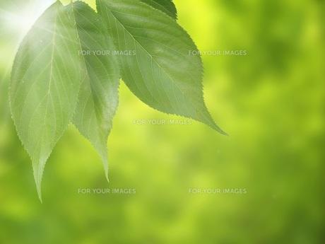 環境イメージ FYI00062347