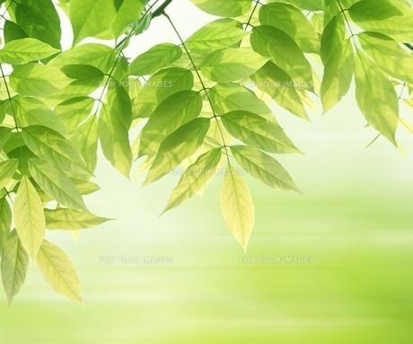新緑イメージ FYI00062373