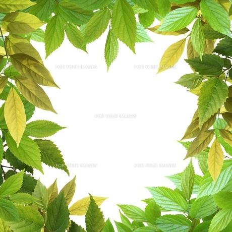 葉っぱのフレーム FYI00062385