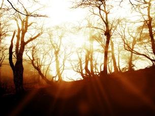 風景イメージ FYI00062484