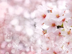 桜 FYI00062488