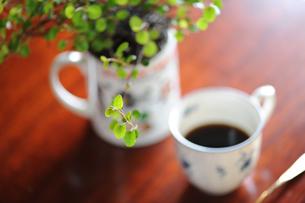 コーヒーと植物 FYI00069212