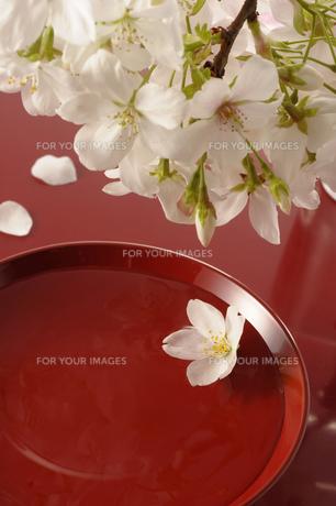 花見酒 FYI00073511
