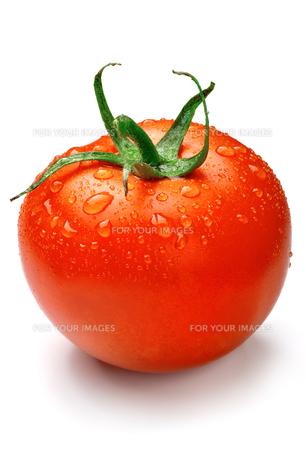 トマト FYI00079944