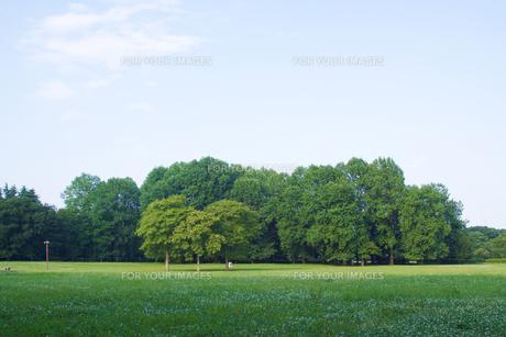 公園の緑 FYI00081983