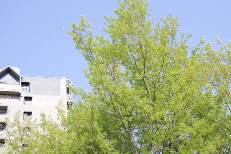 新緑とマンション FYI00082037