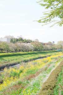 春の野川 FYI00082157