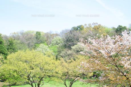 新緑の森 FYI00082171