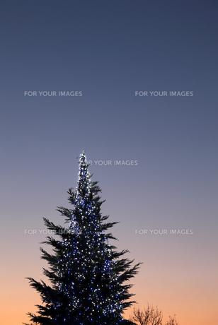 クリスマスツリー FYI00083101