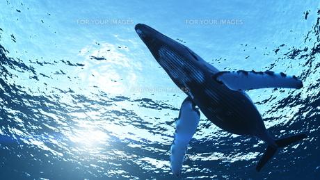 クジラ FYI00086800