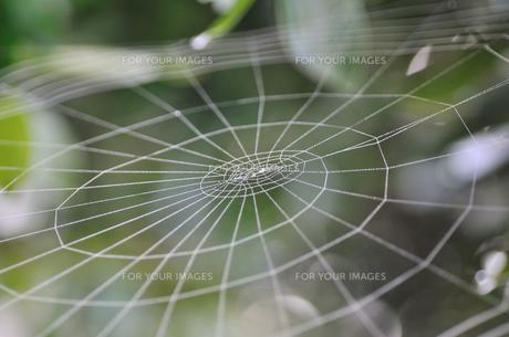 蜘蛛の巣 FYI00089561