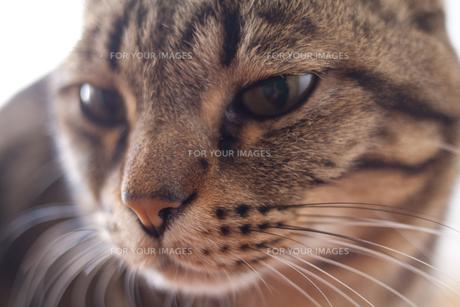 猫アップ FYI00092678