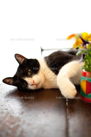手招きする猫 FYI00092772