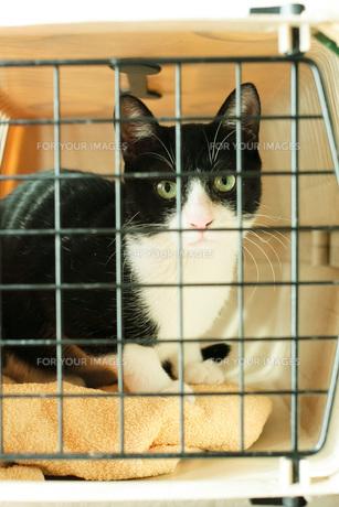 ケージに入った猫 FYI00092801