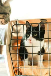 ケージの中の猫と外の猫 FYI00092804