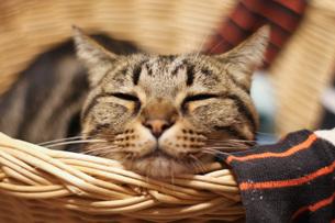 眠る猫 FYI00092811