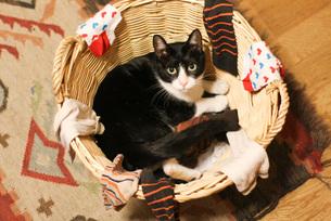 靴下と猫 FYI00092814